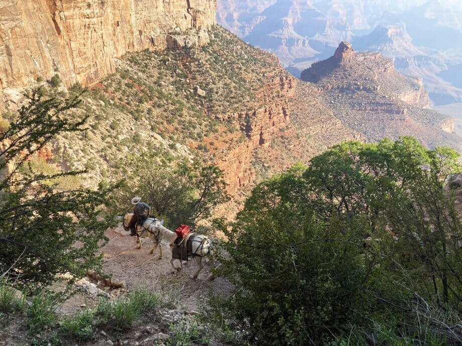 Park Rangers on Mules on the Bright Angel Trail, Grand Canyon